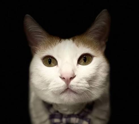 猫 暗闇に浮かぶ むぎくん
