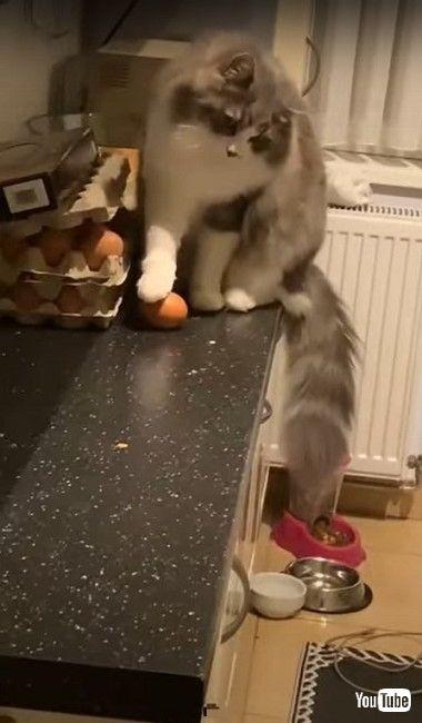 タマゴを壊す猫ちゃん