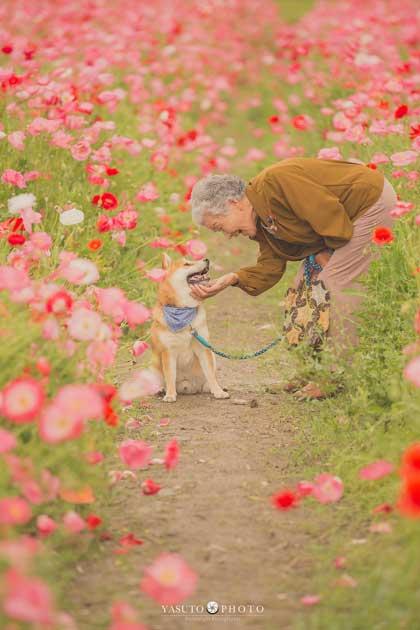 おばあちゃん 柴犬 福ちゃん 幸せ 写真 YASUTO 祖母グラフィー