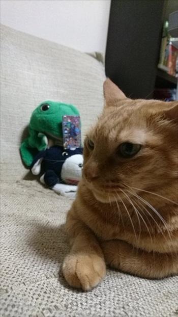 パペットマペットさん子猫
