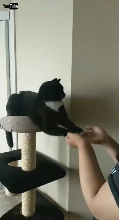 「Kitty Prefers His Paws Are Played With    ViralHog」