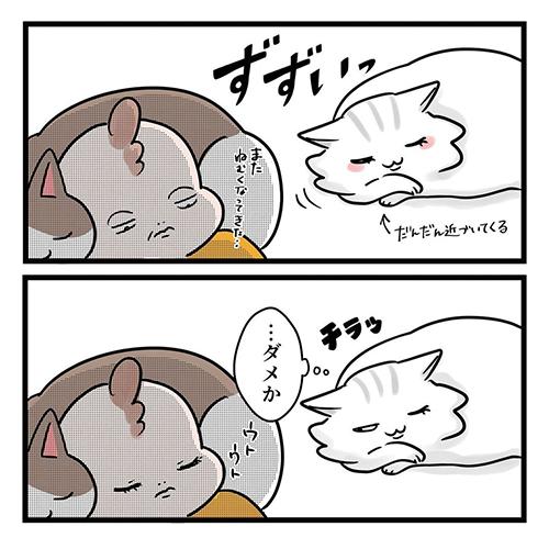 猫だって愛したい4