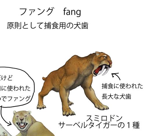 ファング説明