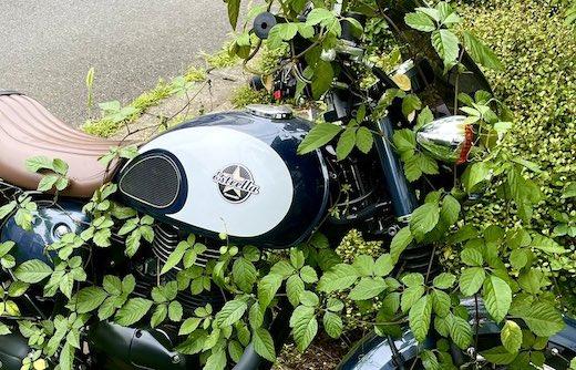 バイク 草 植物 侵食