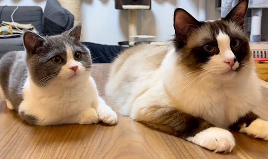 コテツと子猫まるさん