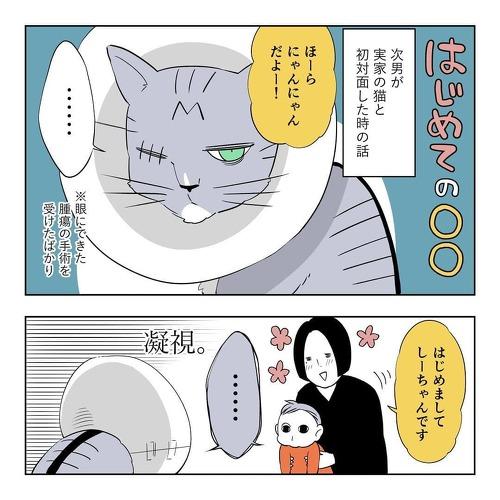 初めて実家の猫に会う