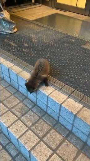世田谷美術館 タヌキ 赤ちゃん 訪問客 警備員 砧 きぬた