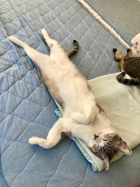 猫 Nクール ニトリ 寝顔 なみそ