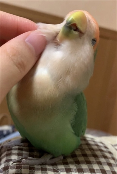 マリモか和菓子みたいな鳥さん