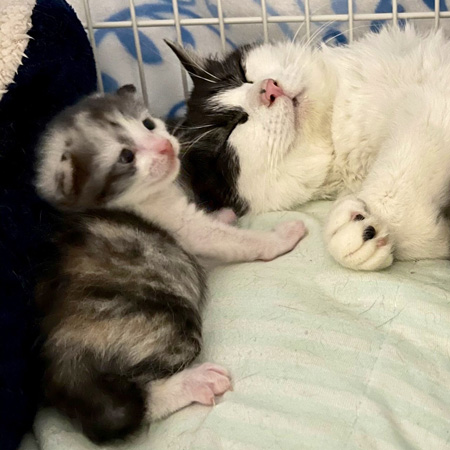 お母さんと子猫