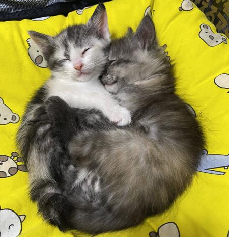 ぎゅっとして眠る子猫2匹