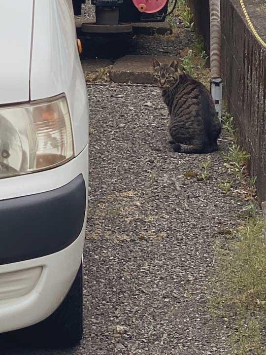 野良猫 写真 レンズの反射 謎 データ受信中 猫