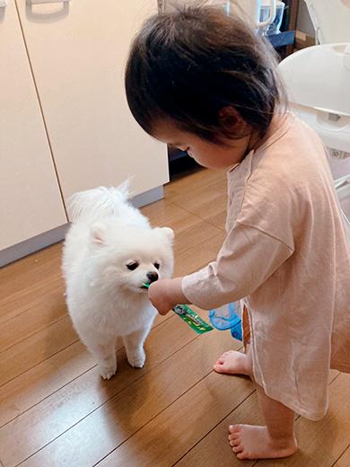 タレ目の犬(ポメラニアン)さん