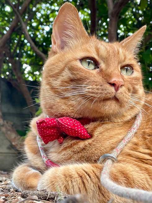 散歩 急いで 家に 帰る 猫 残像 いそげ 疾走感