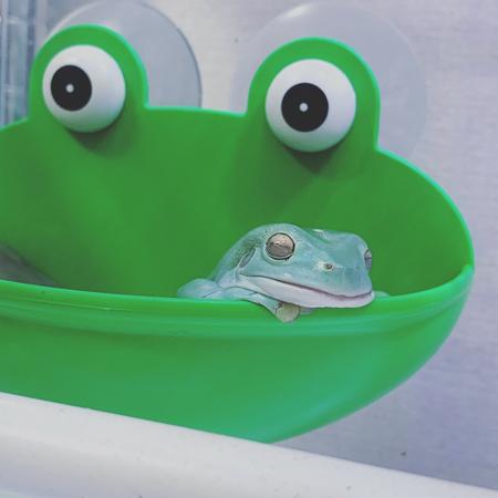 眠るカエルさん