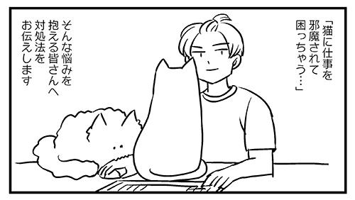 猫飼いの皆さんにアドバイス1