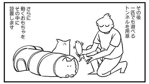 猫飼いの皆さんにアドバイス3