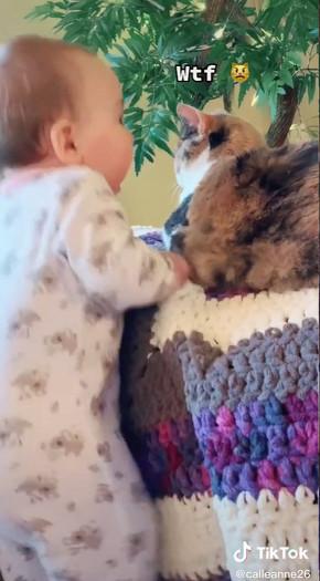 猫に振り向いてほしい赤ちゃん