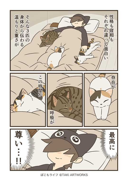 猫と寝る夜 ぽこも お気に入り ベッド 場所 3匹 愛猫 漫画