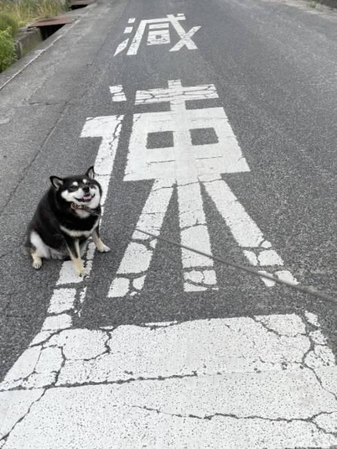 黒柴 たろう君 減速する犬