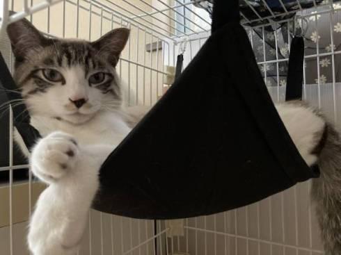 猫 次元を越えそう 銀次朗