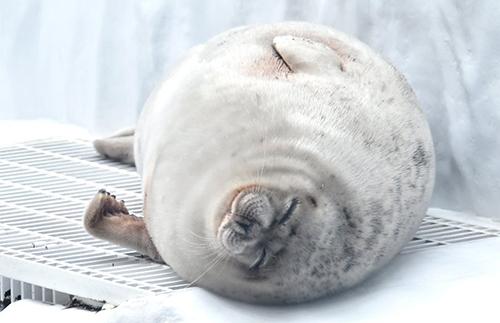 眠るアラレさん