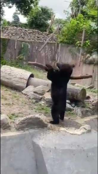 八木山動物公園 めちゃくちゃ打ちそうな 熊 クマ 木の棒 野球 バッター