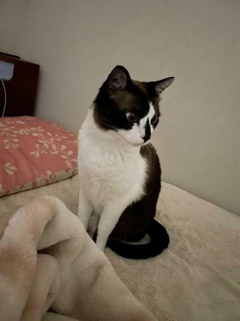 客のプリウス 猫の声 子猫 救出