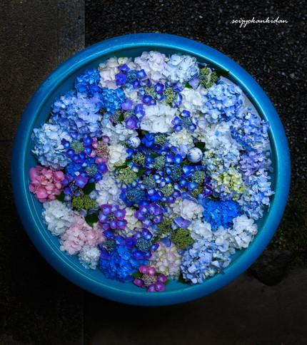 岩船寺の紫陽花手水