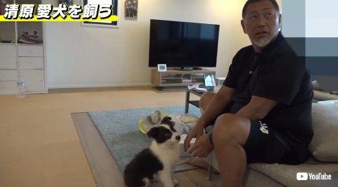 清原和博 野球 犬 自宅 YouTube