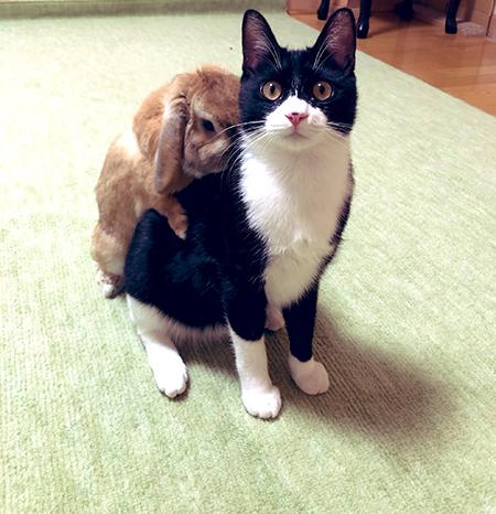 ウサギを背負う猫