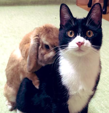 ウサギを背負う猫アップ
