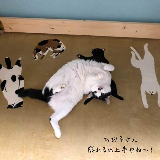 京都 佐々木酒造 猫 社員 上司 紹介