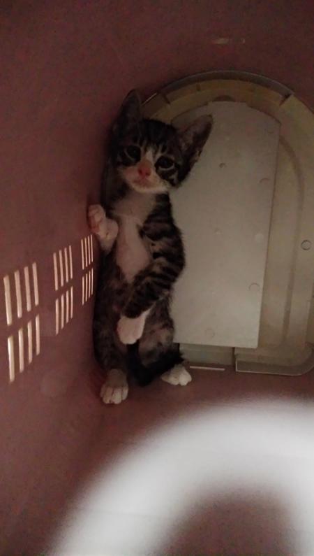 病院から帰ってきた猫ちゃん2枚目