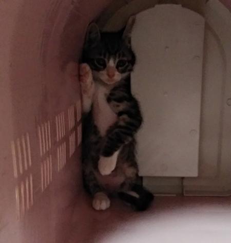 病院から帰ってきた猫ちゃんトリミング