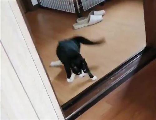 下半身麻痺猫