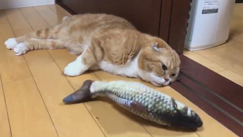 魚のおもちゃときのこくん