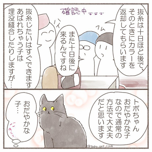 トポ避妊手術終編・当日5
