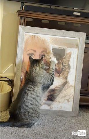 父猫が恋しい猫