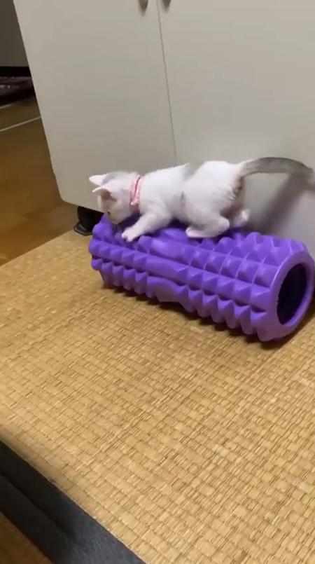 震える子猫5
