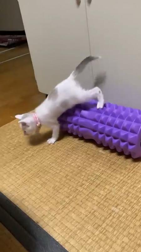 震える子猫6