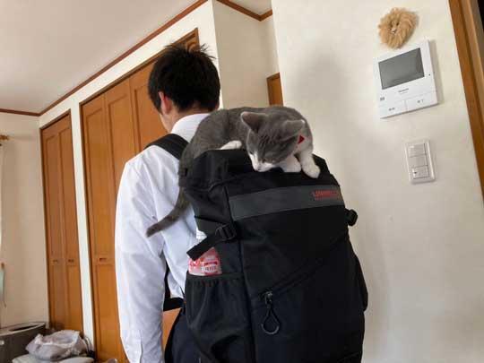 猫 一緒に 登校 リュック 乗る