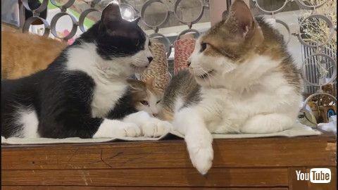「Kitty is Jealous of Friendship Triangle    ViralHog」