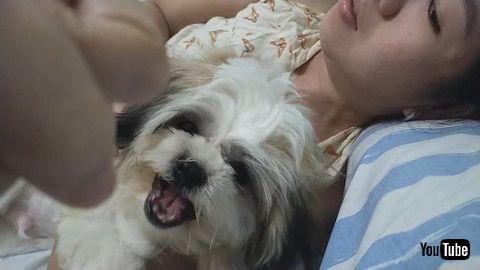 「Sweet Dog Sounds Like Cat || ViralHog」