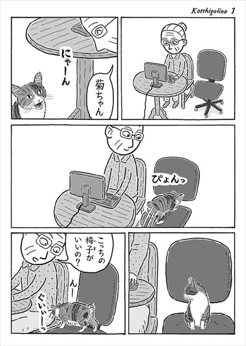 言葉が分かるかのような猫の菊ちゃん