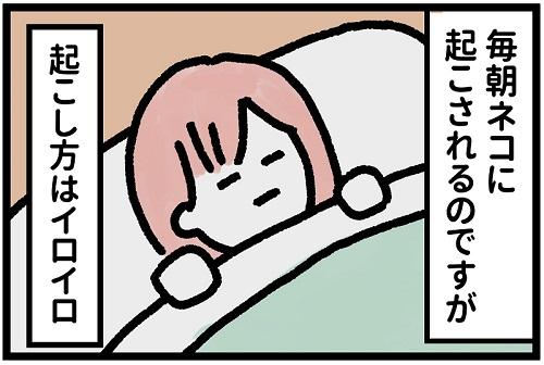ルルちゃん