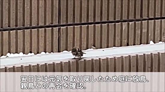 帰っていったスズメ