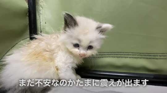 散歩中 ラブラドールが見つけた 子猫 保護 犬 家族