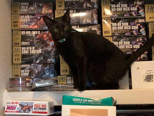 ウォール クライミング 壁 登る 黒猫