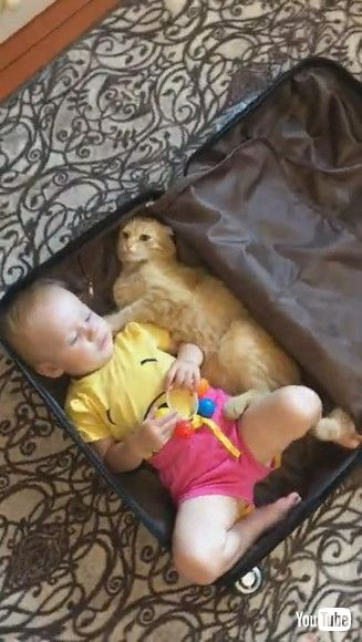 「Kitty and Baby Climb Into Suitcase Together || ViralHog」